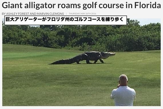 monster-alligater-0526.jpg
