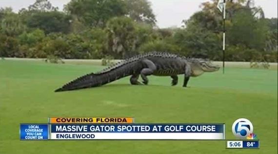 os-giant-golf-course-gator-florida-20150312.jpg